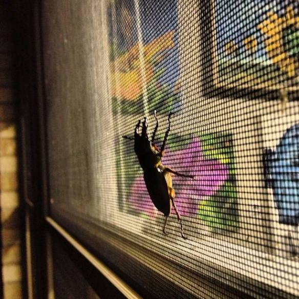 Stag Beetle at an Angle