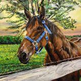 Equestrian Glow | Acrylic on Canvas